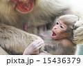 むずがる赤ちゃん 15436379