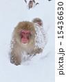 スノーモンキー 15436630