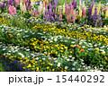 春のお花畑 15440292
