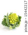 カリフラワー ロマネスコ 食材の写真 15442217