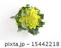 カリフラワー ロマネスコ 食材の写真 15442218