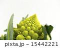 カリフラワー ロマネスコ 食材の写真 15442221