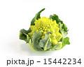 カリフラワー ロマネスコ 食材の写真 15442234