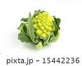 カリフラワー ロマネスコ 食材の写真 15442236