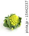 カリフラワー ロマネスコ 食材の写真 15442237