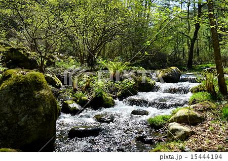 森の小川の写真素材 [15444194] ...