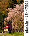祠 しだれ桜 桜の写真 15447594