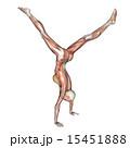 筋肉標本 逆立ちする女性 perming 3DCG イラスト素材 15451888