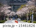 桜並木 並木道 桜の写真 15461626