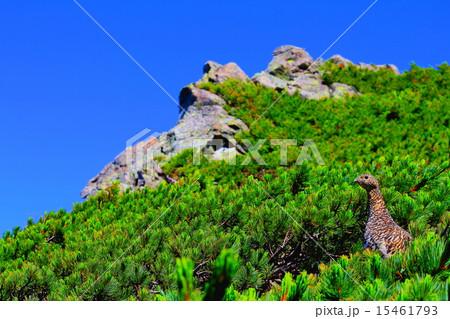 山の住人 15461793