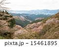上千本 吉野桜 桜の写真 15461895