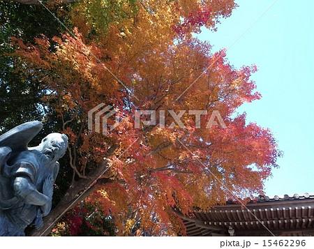 秋の高尾山 15462296
