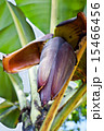 花 フラワー 植物の写真 15466456
