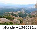咲く 上千本 吉野桜の写真 15466921