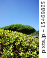 緑 植物 空の写真 15469865