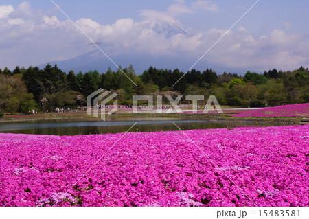 富士芝桜まつり 15483581