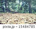 背景 落ち葉 ベンチの写真 15484785