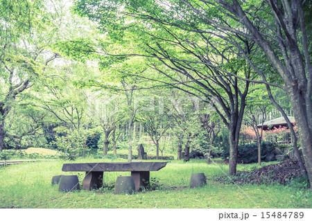 背景素材 ベンチのある風景 15484789