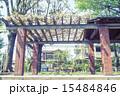 善福寺公園 公園 ベンチの写真 15484846