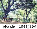 善福寺公園 公園 春の写真 15484896