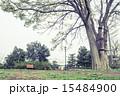 杉並区 ベンチ 公園の写真 15484900
