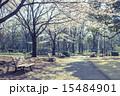 北の丸公園 ベンチ 公園の写真 15484901