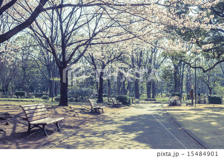 背景素材 ベンチのある風景 15484901