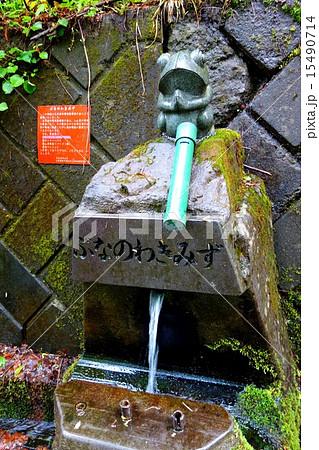 群馬県沼田市・玉原(たんばら)高原のブナの湧き水 15490714