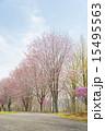 咲く 樹木 植物の写真 15495563