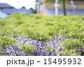 熊野の長藤 15495932