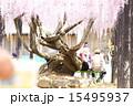 熊野の長藤 15495937