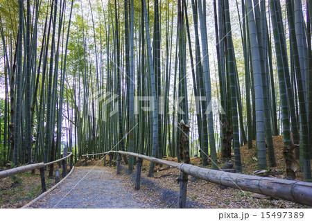 京都:竹林 15497389