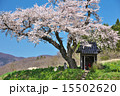 田村市 小沢の桜 一本桜の写真 15502620