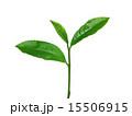 お茶の葉っぱ 15506915