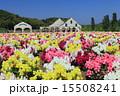 東京ドイツ村 金魚草 花の写真 15508241