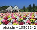 東京ドイツ村 金魚草 花の写真 15508242