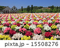 東京ドイツ村 テーマパーク 金魚草の写真 15508276