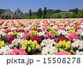 東京ドイツ村 テーマパーク 金魚草の写真 15508278