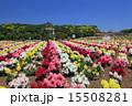 東京ドイツ村 テーマパーク 金魚草の写真 15508281