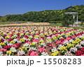 テーマパーク 東京ドイツ村 金魚草の写真 15508283