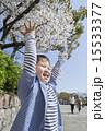 バンザイ 桜 子供の写真 15533377