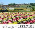 東京ドイツ村 金魚草 レジャー施設の写真 15537151