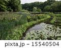 池 ハス アヤメの写真 15540504