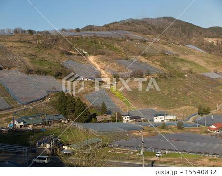 傾斜地に広がるビニールハウス 15540832
