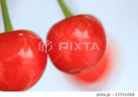 旬の果物 日本産さくらんぼ 鳥に食べられる前に急いで収穫 15541068