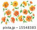 水彩 ポピー 花のイラスト 15548383