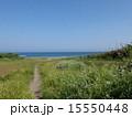 海 新緑 道の写真 15550448
