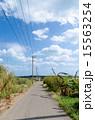 沖縄県 一本道 シュガーロードの写真 15563254