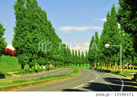 千葉県印西市、印西牧の原駅周辺、並木通り 15596371