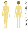 ヌード 人体 ベクターのイラスト 15602659